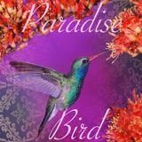 Mehlem Paradise Bird