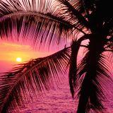 Mix Chill | Sunset and Black Rat