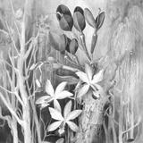 Lemonella: Plant Poetry Vol. I