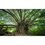 Jay Phonic - Trees need love too
