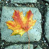 Autumn Clash