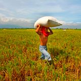 Interview: Shaping international action on social protection and food security