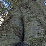 Wunder der Natur: Die Mulmhöhle