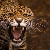 Roughneck Jungle Selections Vol 1