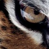Eye Of The Tiger. Mixed by Rom & DGroove