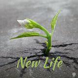 New Life: Abundant Love 04/15/18 Dr. Brad Morgan