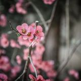 Spring Awakening by Fauth Gundlach & Hübl