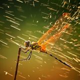 Trancending Dragonfly Island