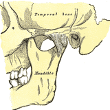 Hump-Bump Mixtape 019: Temporo-Mandibular Joint