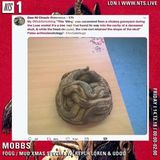 Mobbs w/ Rephl Loren & Udou - 13th December 2018