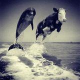 "Ben Manson present ""Dolphins love Cows"""