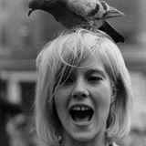 Veinte Años Y La Cabeza Llena De Pájaros
