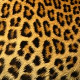 Leopard Mix