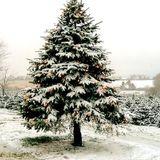 Quietmusic - December 18 (Hour 2 excerpt)