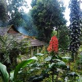 The Gurukula Botanic Sanctuary: Interview with Subrabha Seshan