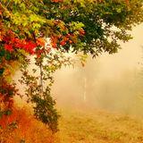 """♫ """"Pavo - September 2015"""" ♫"""