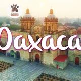 Tras las Huellas del Sabueso -  Oaxaca y Turismo Cultural.