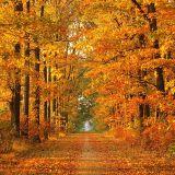 Vrabie Kosmyn - Autumn promo mix (September 2012)