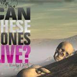 Viviran estos huesos secos? 12-29-13