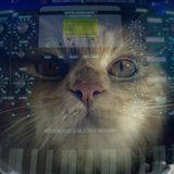 CAT#04