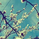 Primavera Deep 2012 (Part 2)