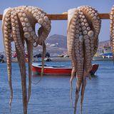 Galician Octopus Mix