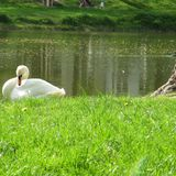 The Rise, Liberation and Fall of a Love Affair