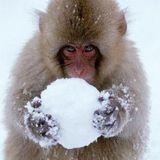 Snowball Efx by Deepbreath