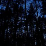 Nik Melodik - Night In The Coniferous Forest