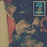City dogs sessions 001 by Nasper