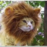 Suburban Cat Jungle - Randolph & E.P.-SoFla DnB