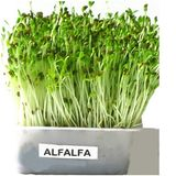 Alfalfa Sprout Mini Mix