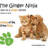 Tales of the Ginger Ninja Interview