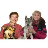 Finding Healing in the Company and Lessons of Sled Dogs
