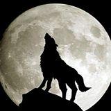 Beats under the moon!
