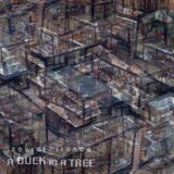 A Duck in a Tree 2015-05-09 | Sleight Reticulate