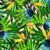 Brazilian Rhythm & Grooves II