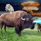 Buffalo Thrillz 2017 Mix