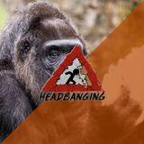 Headbanging  - 19.04.2018 - Des gorilles qui mangent des biscuits