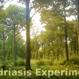 The Mydriasis Experiment #8