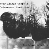 CHAOS SEDATED #175 - HERR LOUNGE CORPS & CADAVEROUS CONDITION