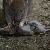 Hellpsy - Le mix en rat (09/09/2015)