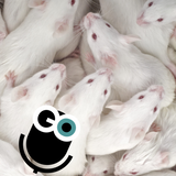 Episode 267: Plastics and Zombie Pigs, IN MICE!