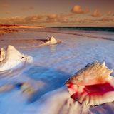 I put a seashell in my ear and it all comes back -Maya Beach.