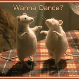 wanna dance..? feb 2019