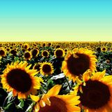 Dave Allison- Summer Sun Mix