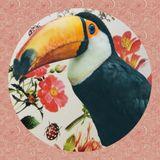 Le Toucan 001 - Une journée printanière avec Chloé