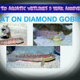Road to Aquatic Wetline's 3 Year Anniversary: Diamond Goby Chat