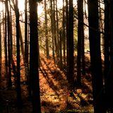 03 Thetford Forest