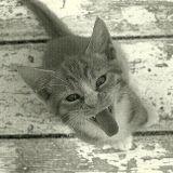 Die Kitten Tape 7